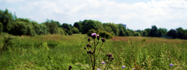 Wildflower meadow at Stockbridge Road, Huyton